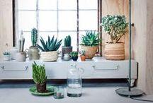 G R E E N S / Greens, plants, flowers, garden