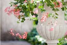 Gardens, Plants and Roses / by Takako