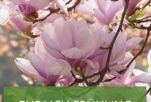 Endlich Frühling / Wir lieben den Frühling, ihr auch? <3