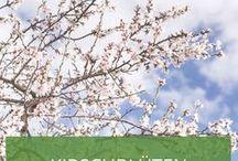 Kirschblüten / We love Cherry Blossoms <3