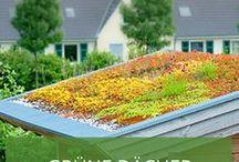 Grüne Dächer / Grünflächen sind wichtig zum Schutz von Tieren, Pflanzen und Umwelt. Entsprechend haben wir hier schöne Inspirationen gesammelt, wie sich Dächer und Wände begrünen lassen.