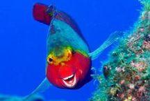 Zaskakujące zwierzęta / ... bo natura powoli odkrywa przed nami swoje sekrety