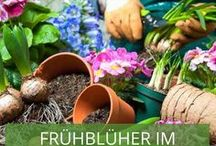 Frühblüher im Garten / Schneeglöckchen, Narzissen, Tulpen und Hyazinthen. Diese und noch mehr Frühblüher bringen eine frühlingshafte, frische, bunte Stimmung in Ihren Garten! Wir haben die schönsten Inspirationen für Sie gesammelt.