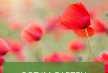 Rot im Garten: Die schönsten roten Blumenbeete / Die Farbe Rot in der Natur steckt voller Bedeutungen: Rote Rosen sind das Zeichen der Liebe, Morgenröte ist voller Wärme - und natürlich dürfen wir auch rote Be(e)te nicht vergessen! Wir zeigen Ihnen die schönste rote Blumenpracht als farbenfrohe Inspiration für Ihren Garten!