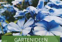 Gartenideen in Blau: Blaue Blumenbeete / Blaue Beete sind der Hingucker in Ihrem Garten. Lassen Sie sich hier von Blumen- und Farbkombinationen inspirieren.