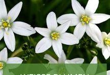 Weiße Blumen - Inspiration für einen weißen Garten / Ein weißer Garten ist nicht monoton, sondern ausgefallen, wenn man richtig kombiniert. Lassen Sie sich vom weißen Blumenmix inspirieren!