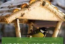 Vogelhäuschen basteln: Vögel kreativ anlocken / Sie wollen Vögel in Ihren Garten locken? Lassen Sie sich von einer Vielzahl an DIY-Vogelhäuschen zum selber basteln inspirieren. Das Board bietet auch viele Ideen, wie Sie Vogelfutter kreativ präsentieren können - allein durch Recycling oder Upcycling schaffen Sie ganz schnell einen außergewöhnlichen Blickfang in Ihrem Garten.