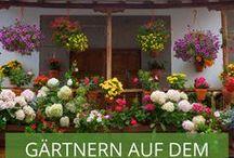 Gärtnern auf dem Balkon / Sie haben einen grünen Daumen und lieben es Blumen und Gemüse selbst anzubauen - aber Ihnen fehlt der eigene Garten? Mit diesen Ideen können Sie Ihren Balkon in eine farbenprächtige Grünlandschaft verwandeln.