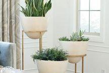 ^-^--~ plants
