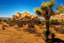 """Deserts / A desert is a landscape or region that receives an extremely low amount of precipitation, less than enough to support growth of most plants. They can be describes as places where more water is lost than falls. There are """"hot"""" and """"cold"""" deserts. They take about 33% of the earths surface. The largest """"hot"""" desert is the Sahara in northern Africa, covering 9 million square kilometers and 12 countries.The Antarctic is the largest """"cold"""" desert covering over 13 million sq kilometers. / by CJ Foxcroft"""