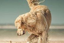 Lovely animals / by Giuseppina Mabilia
