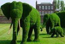 Elephants / by Merideth Henry