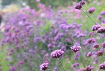 Flowers / by Giuseppina Mabilia