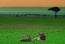 Destinations / National Parks. Hinterlands. Rainforests. Australian Outback. Places of Significance.