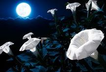 Secret ✿ Garden Under the mOon / A moon's glow always helps a secret garden grow!