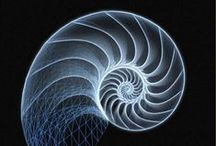 Seashells & Science / Seashell geometry and structure links to Logarithmic Spirals and inspires architecture and research - we supply scientific institutions around the world with material