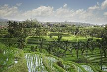 All Things Bali / Bali is one of my favourite places in the world.
