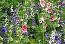 My Little cottage garden in de Beemster / Ideeën , plannen voor en dromen over mijn stukje grond in de Beemster. Handige handen en groene vingers gezocht!!!