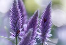 Purplelicious! / by Liz Horsley