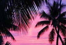Hawaii | hoppa