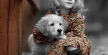 Family Pets / Pets are so much more then companions. They are important members of our families with personality.