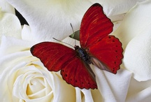Ceremonies- Butterfly Release / by A Forever After Wedding Rev. Patricia Borsum