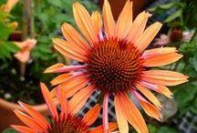 Vratimov - návrh zahrady / inspirace, barevné kombinace, rostliny