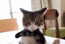 猫ってさ~ / とりあえず、可愛いからな~ そして、猫の気持ちで勝手にコメント入れるよ!
