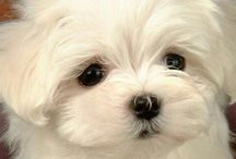 Dogs & Cats / Cute pet pictures. What more do you need?