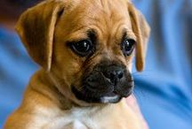 #dogdog
