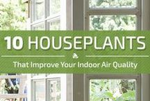Allergy Free Living / Improving the air you breathe