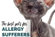 Pets & Allergies / Just because you have allergies doesn't mean you can't have a four-legged family member.