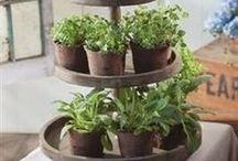 Gardening Plans and Ideas / Gradening!