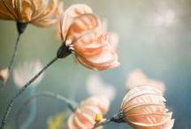 Favorite Florals / Our favorite floral arrangements and bouquets that inspire us!