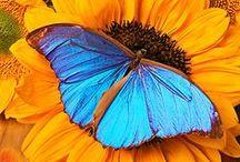 ~ Butterflies~