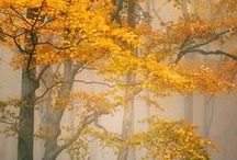 Trees - Photography