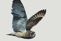 Wildlife Wearables / T-shirts, tank tops, watches and bags featuring birds, mammals and insects.