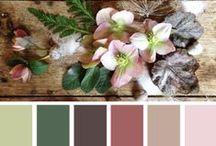 Colors combination / Colors