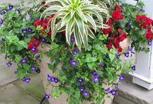 gardening / I love a beautiful garden,it so rewarding potting up hanging baskets and bags for instant quick color.