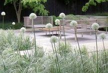 House - Voortuin wit / Moodbord voor opzet witte beplanting voortuin. Combinatie van leibomen, witte planten en (sier)grassen