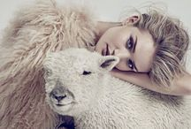 don't be PEEP~ing at my SHEEP / Leave them alone and they will come home, wagging their tails behind them!