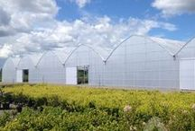 Polycarbonate Greenhouses / Polycarbonate Panels for DIY, Hobby, and Commercial Greenhouse Applications