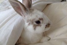 Buns - 'nuff said!  / Quite simply the most adorable thing on the planet....