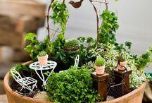 Miniature gardens / Ahh - memories of childhood.....!