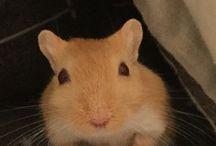 Gerbs ❤️ / Such sweet, friendly little guys!