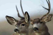 Majestic creatures / Just beautiful....