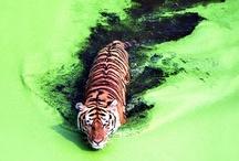 Photography : animals
