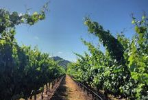 Beautiful Napa Valley!! / Grapes, grapevines, wine