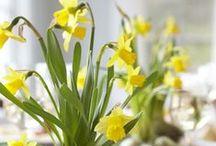 Évszakok - Tavasz