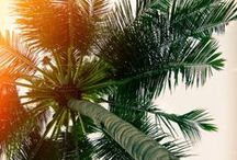 Palms obsession